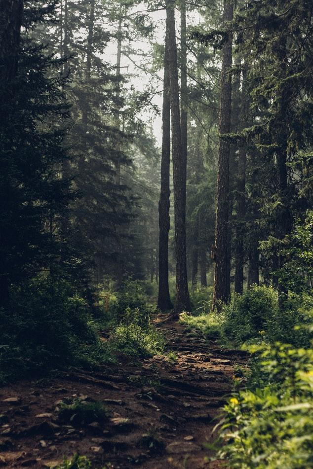 beautiful natural HD Forest Wallpaper