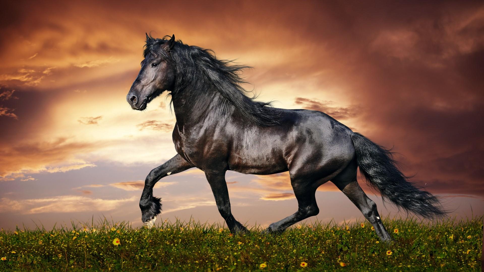 cool Black Horse Wallpaper