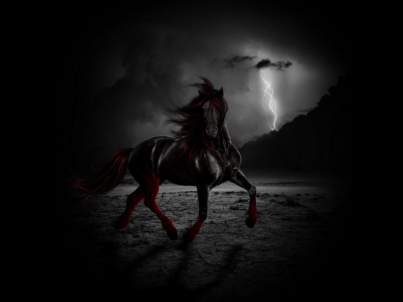 free Black Horse Wallpaper
