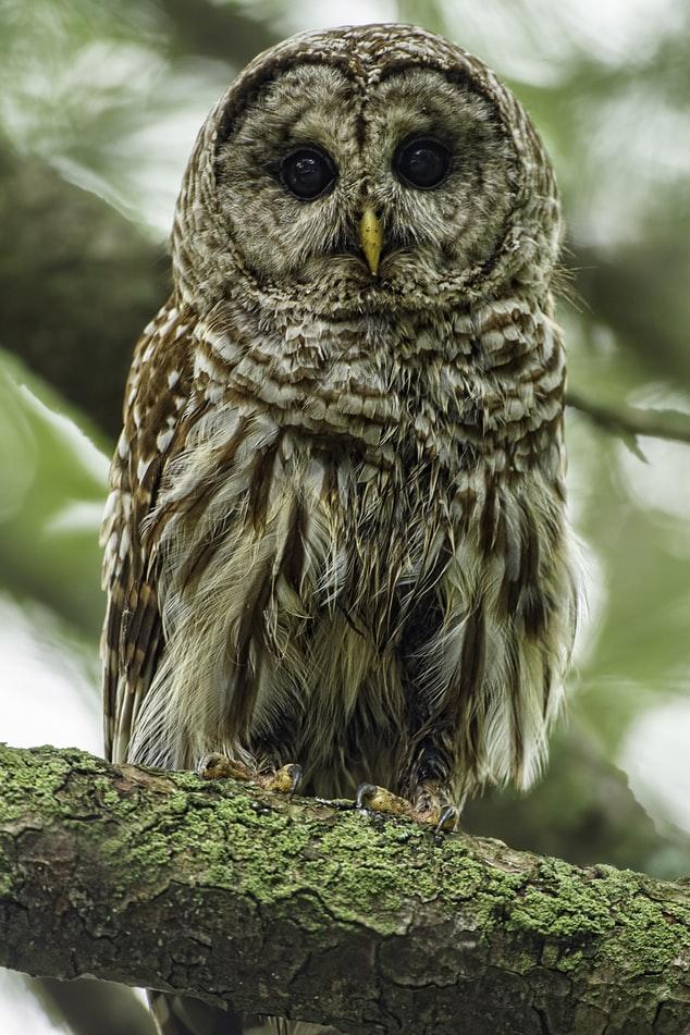 so cute Owl Wallpaper