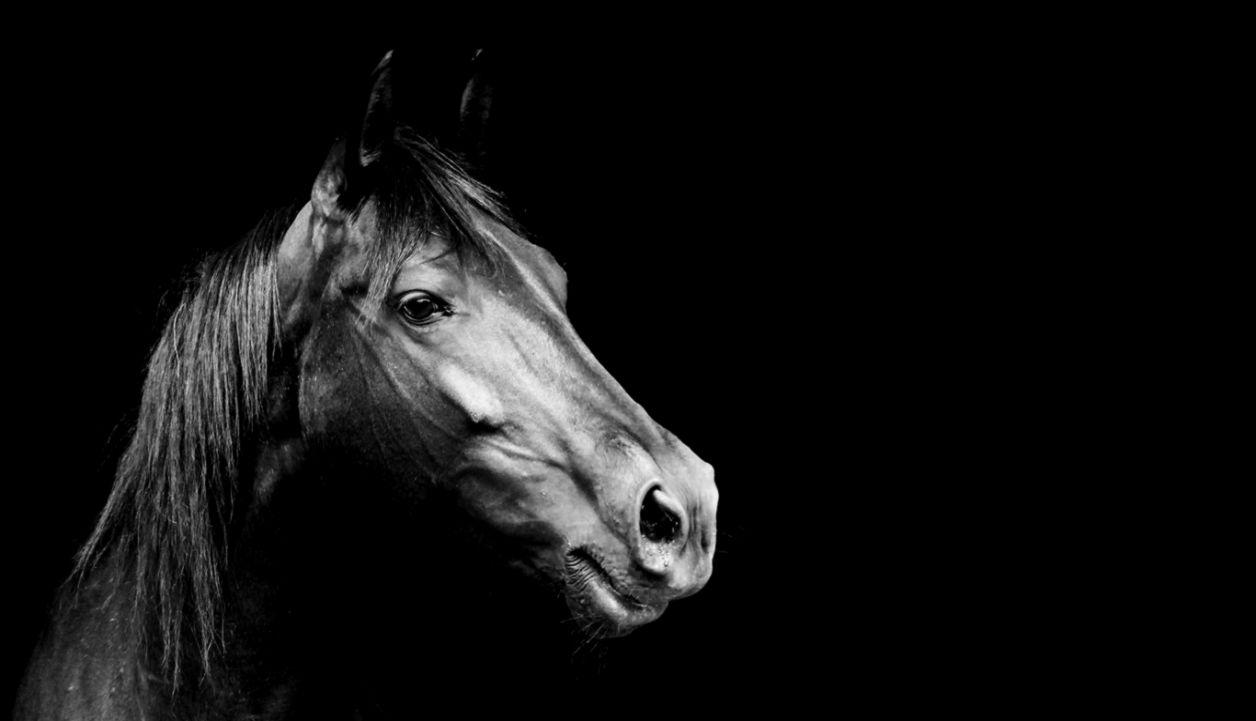 wonderful Black Horse Wallpaper