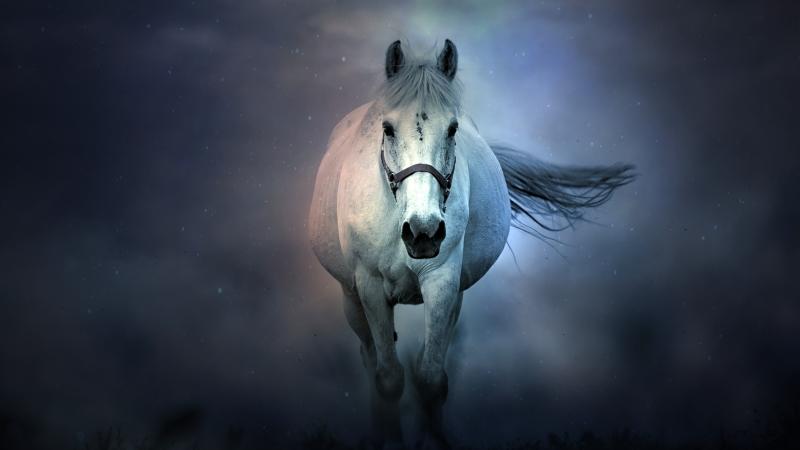 animal White Horse Wallpaper