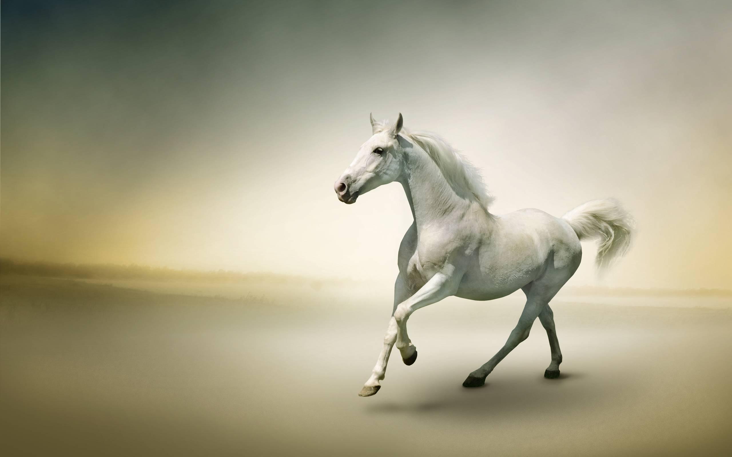 best White Horse Wallpaper