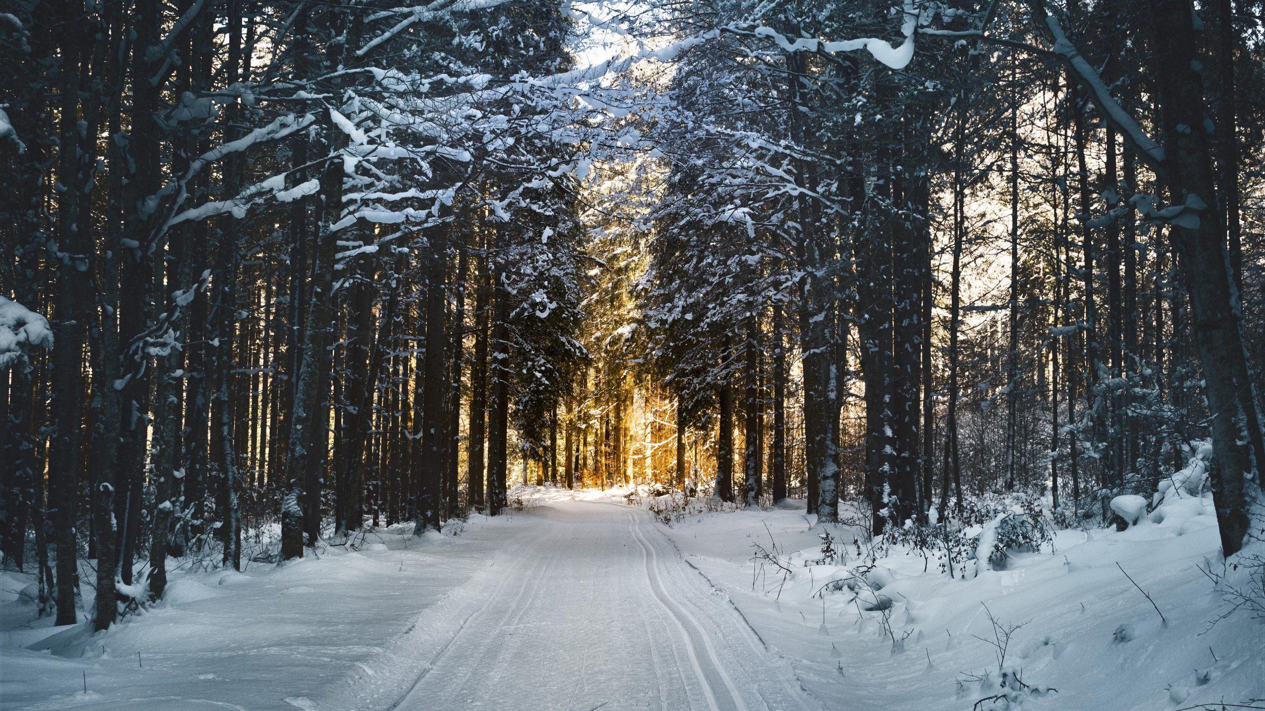 best Winter Wallpaper 4K