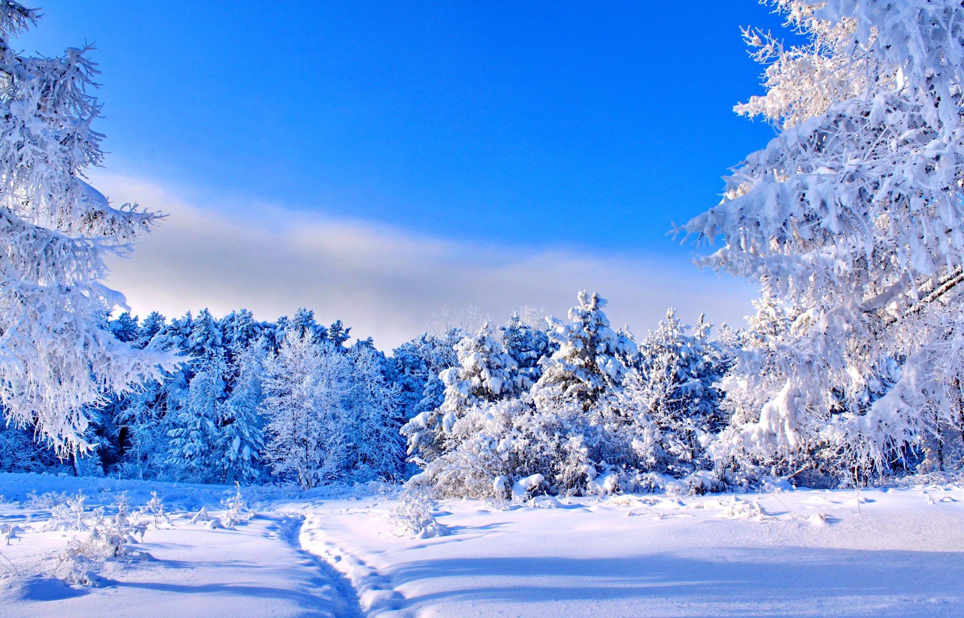 free Winter Wallpaper 4K