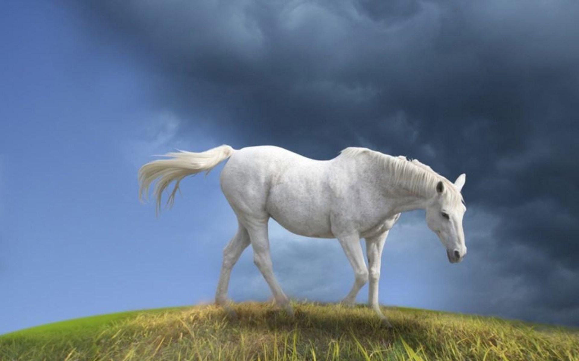 grass on White Horse Wallpaper