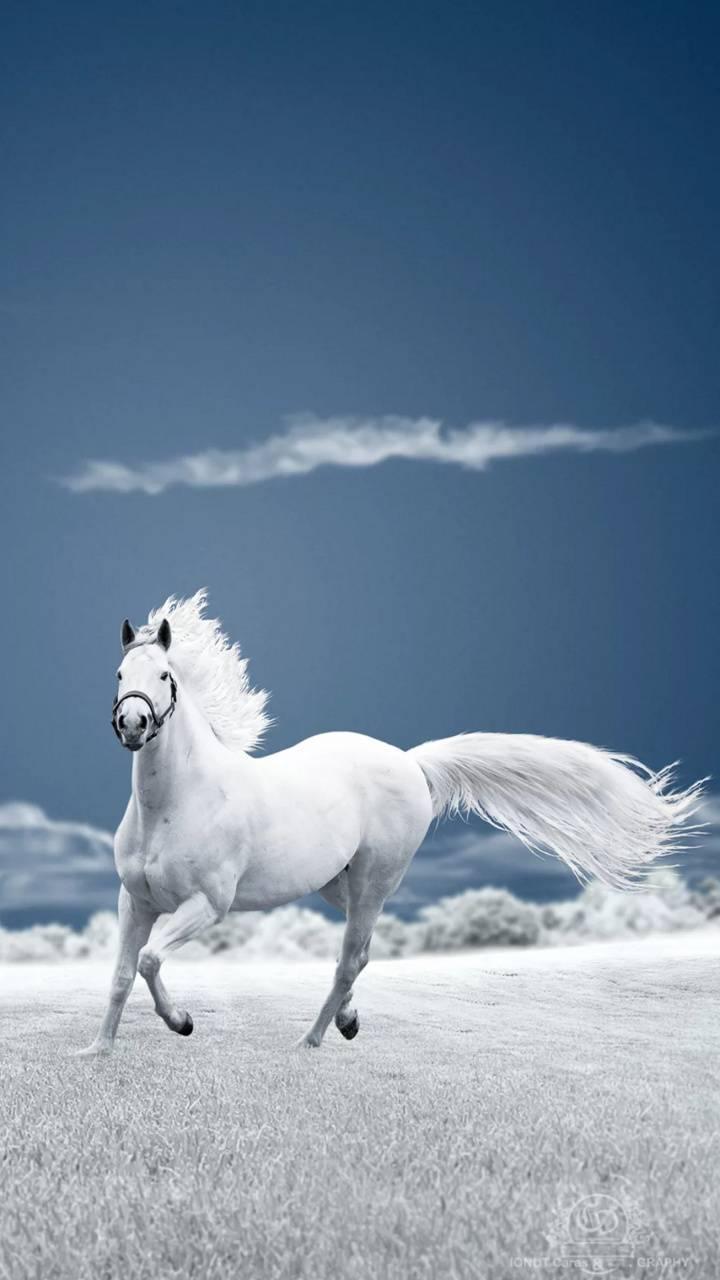 snow mountain White Horse Wallpaper