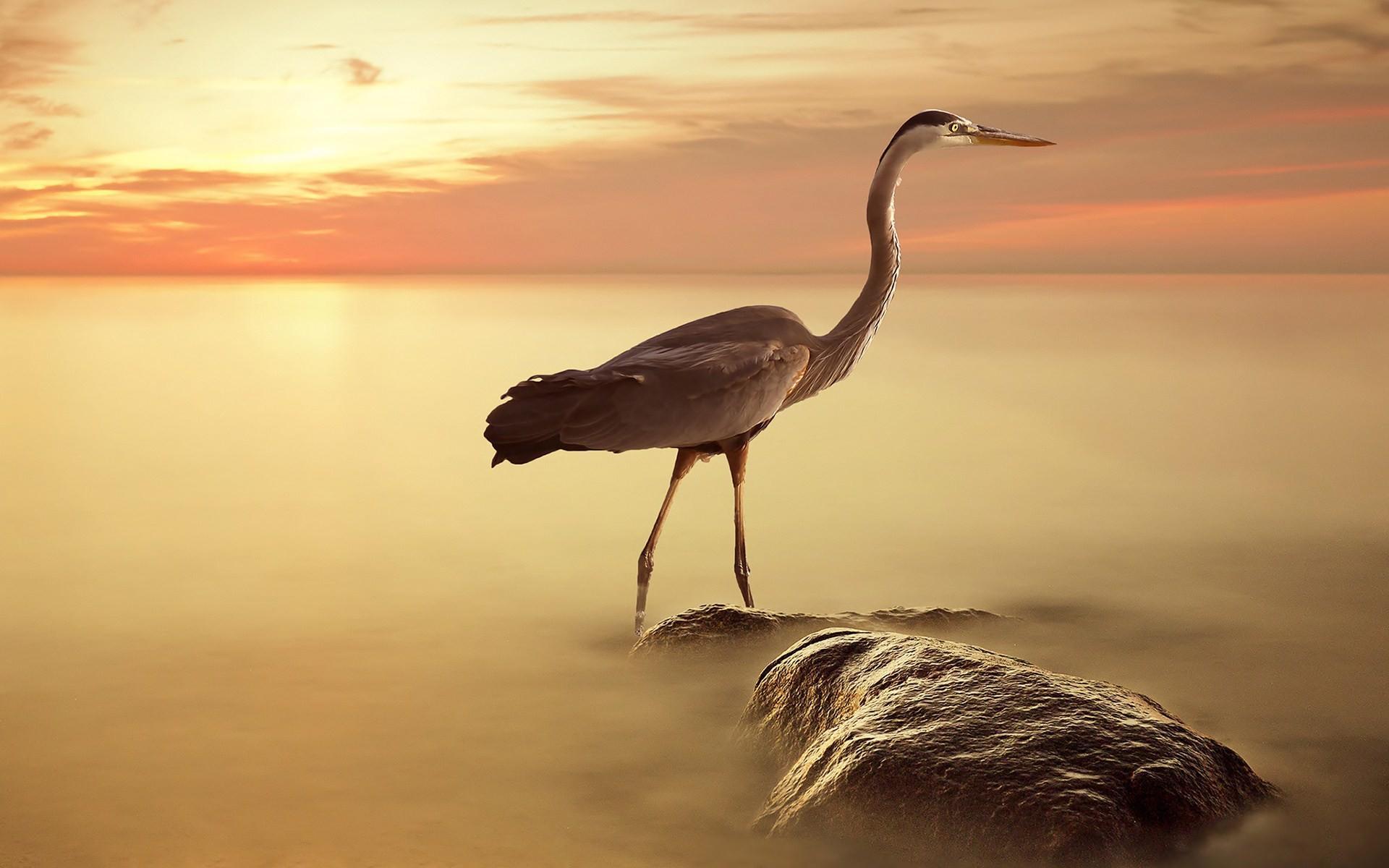 sundown natural Heron Wallpaper