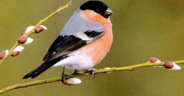 best Beautiful Birds Wallpaper