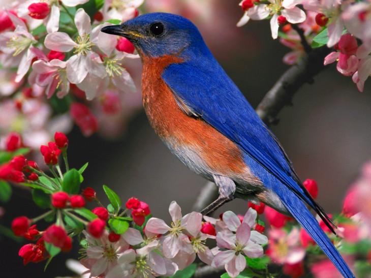 colorful Beautiful Birds Wallpaper