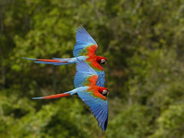 flying natural Beautiful Birds Wallpaper