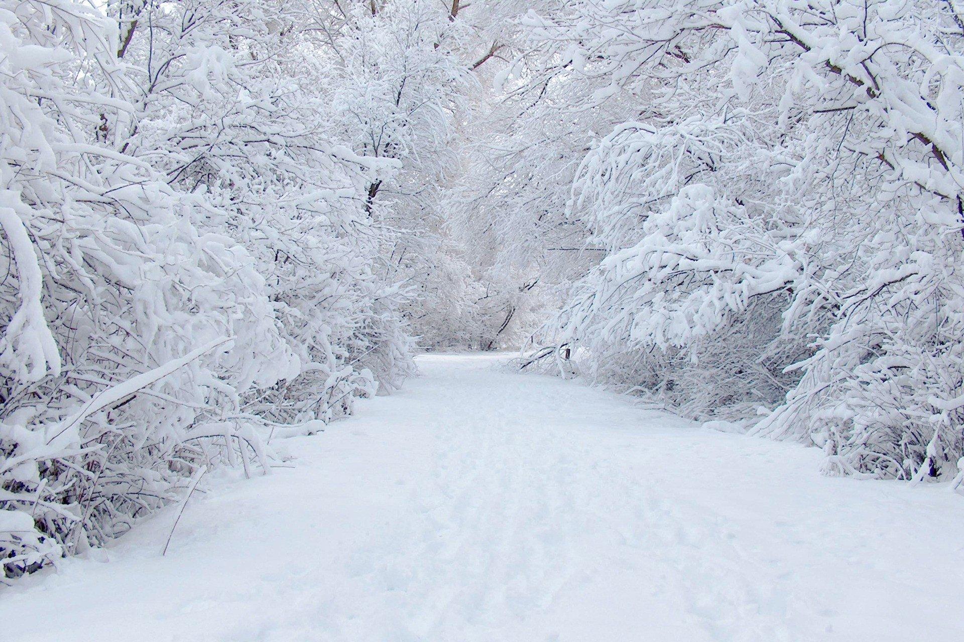full snowfalling on road image