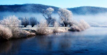 lake with white tree image