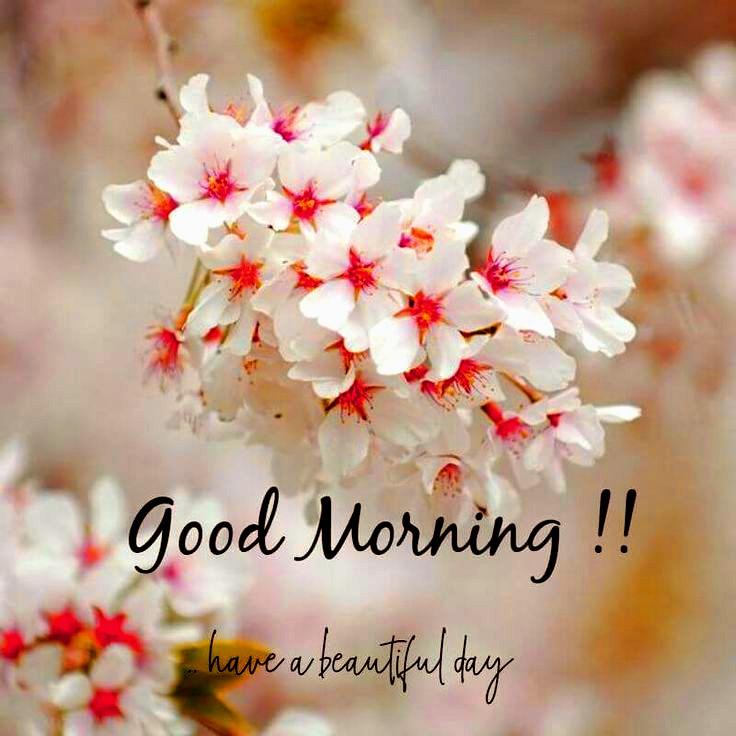 nice hd good morning image