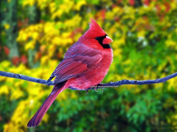 pink Beautiful Birds image for desktop