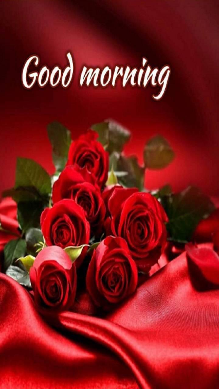 red flower good morning image
