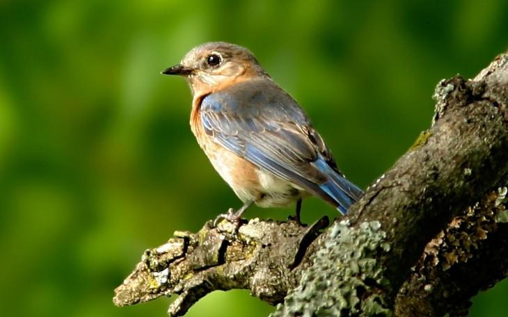 widescreen natural Beautiful Birds Wallpaper