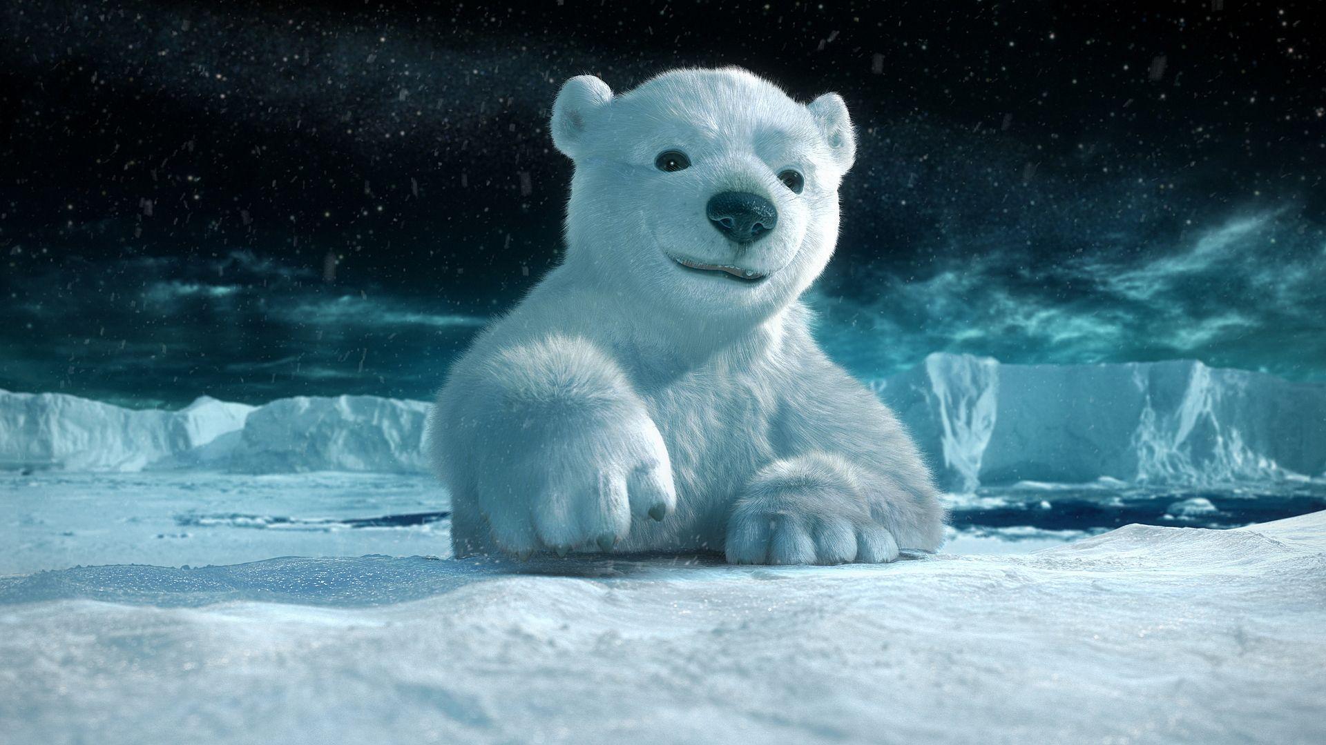 big face Polar Bear Wallpaper