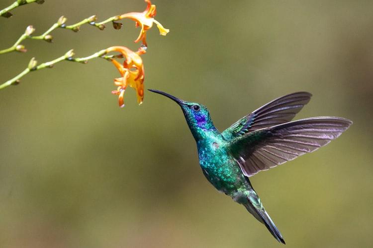 colorful bird Hummingbird Wallpaper