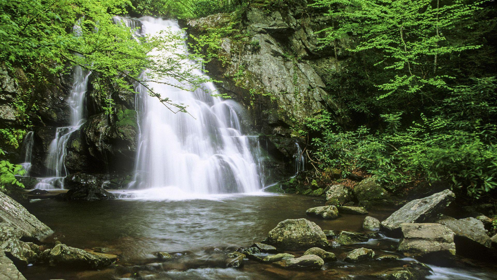 green tree Waterfall Background