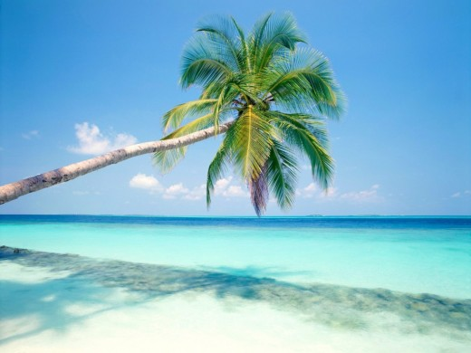 small Tropical Island Wallpaper