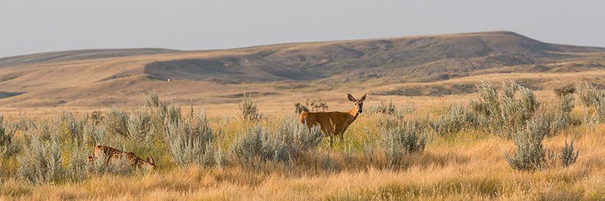 Awesome Grasslands National Park