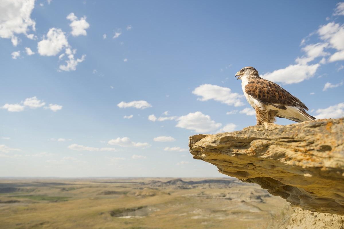 best nature Grasslands National Park