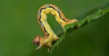 animal Caterpillar Images