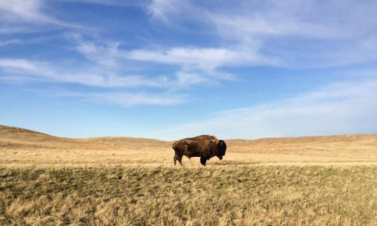 full top Grasslands National Park