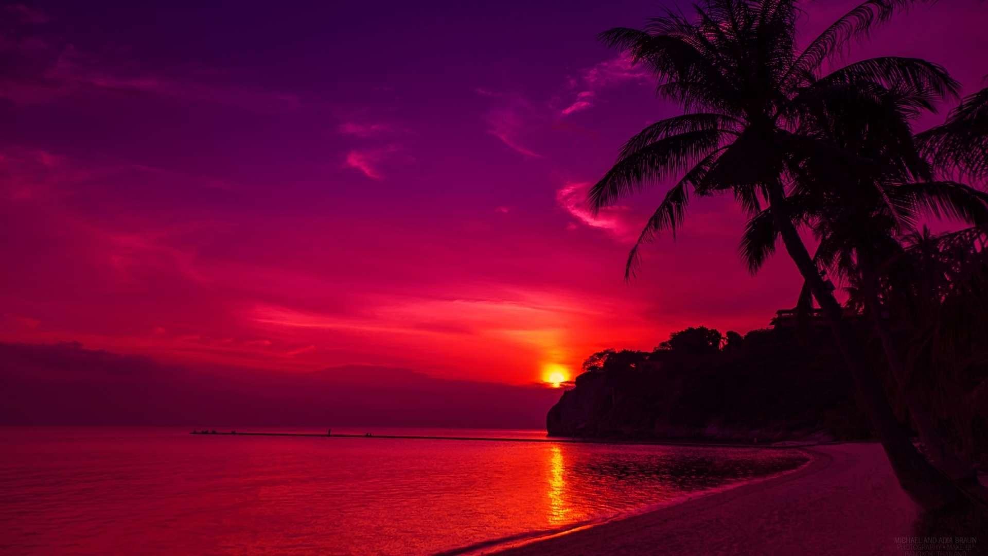 palm tree HD Sunset Wallpaper