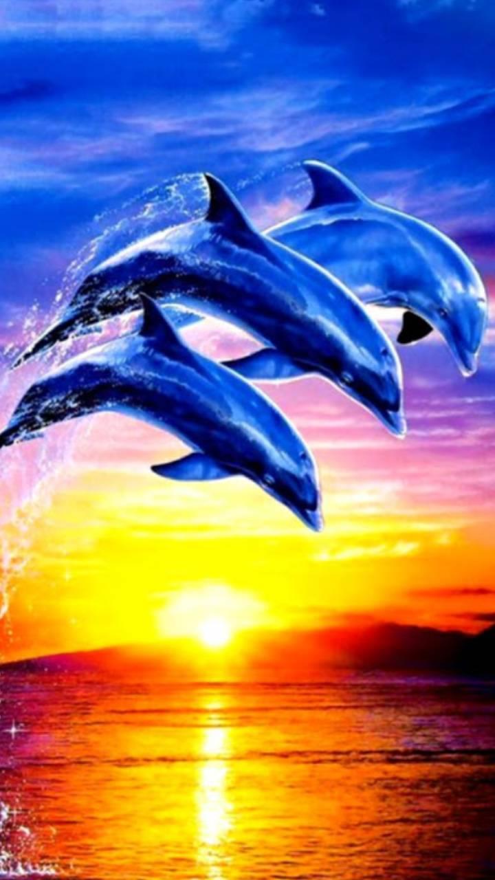sundown Dolphin Wallpaper