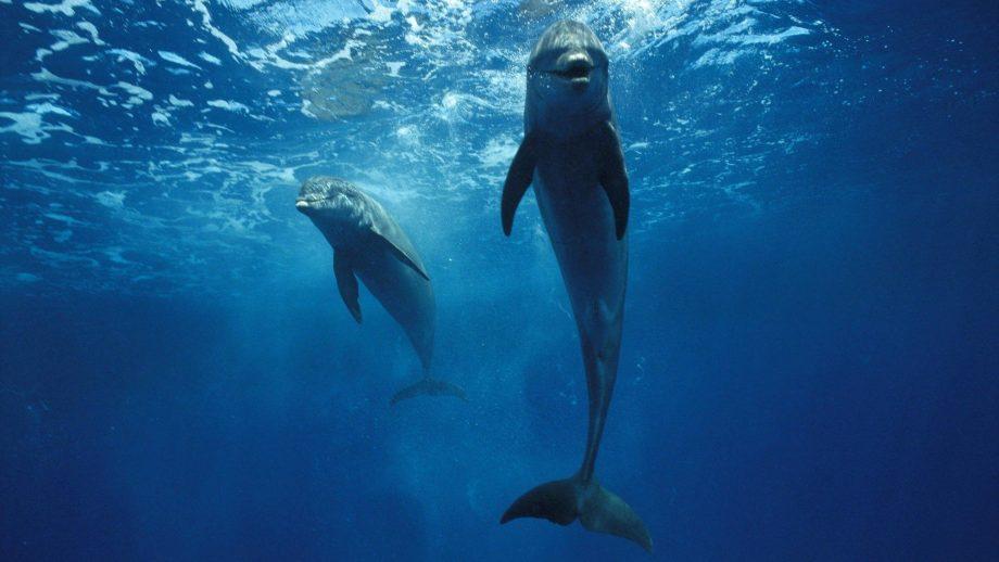 widescreen Dolphin Wallpaper