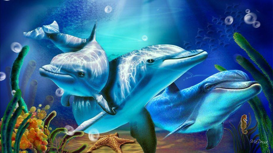 wonderful Dolphin Wallpaper