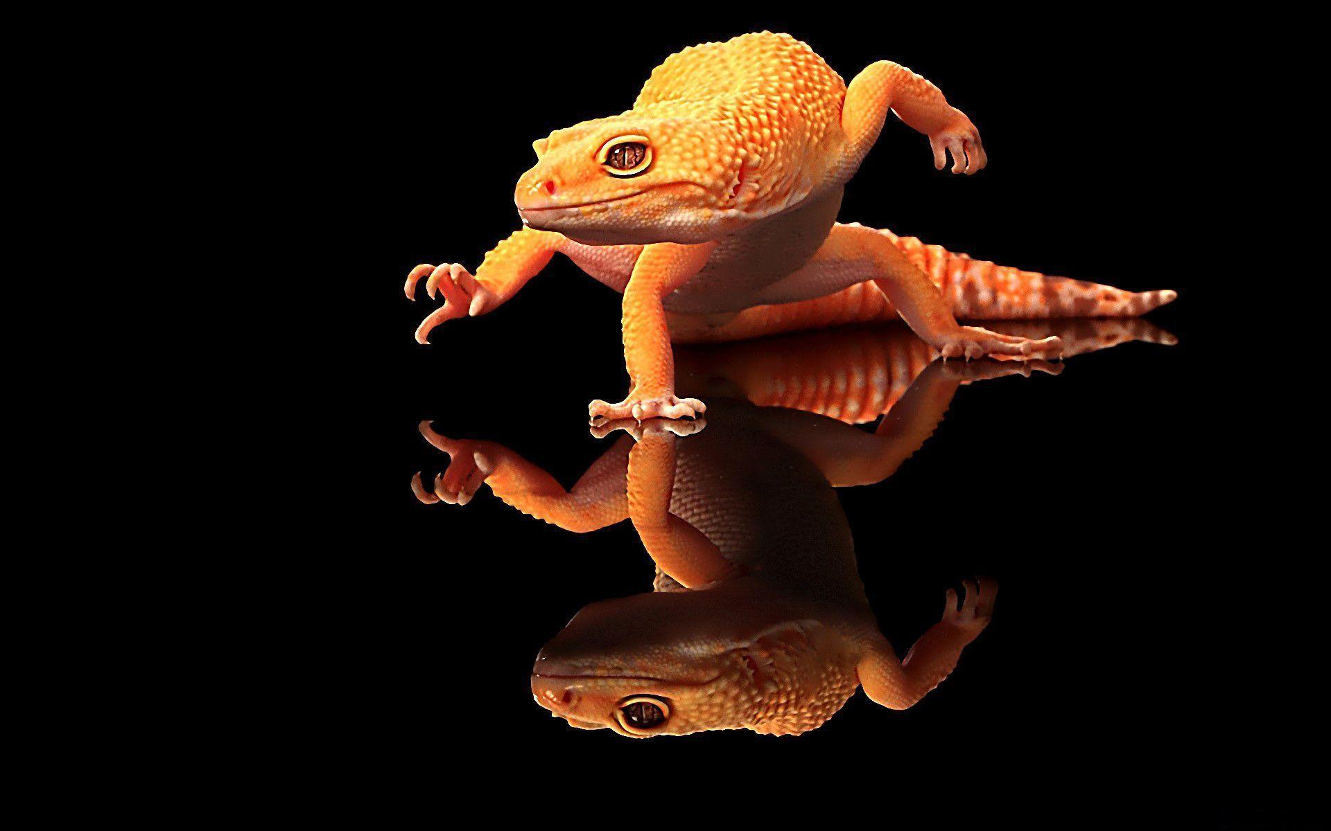 amazing Gecko Wallpaper