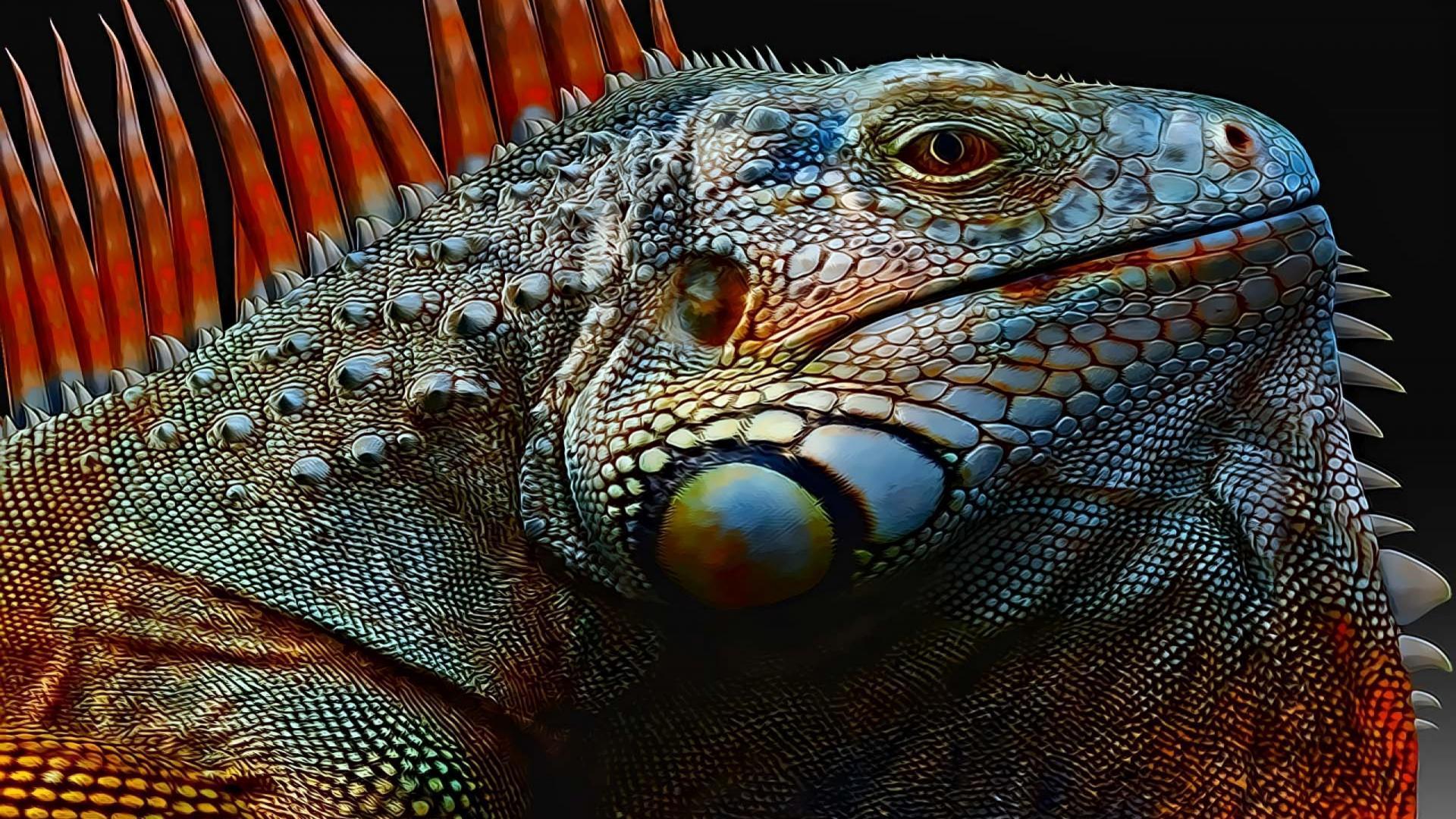 danger look Iguana Wallpaper