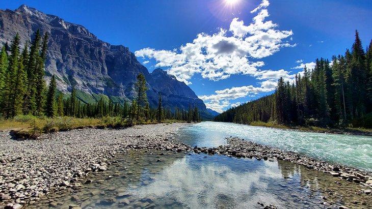 green tree Banff National Park