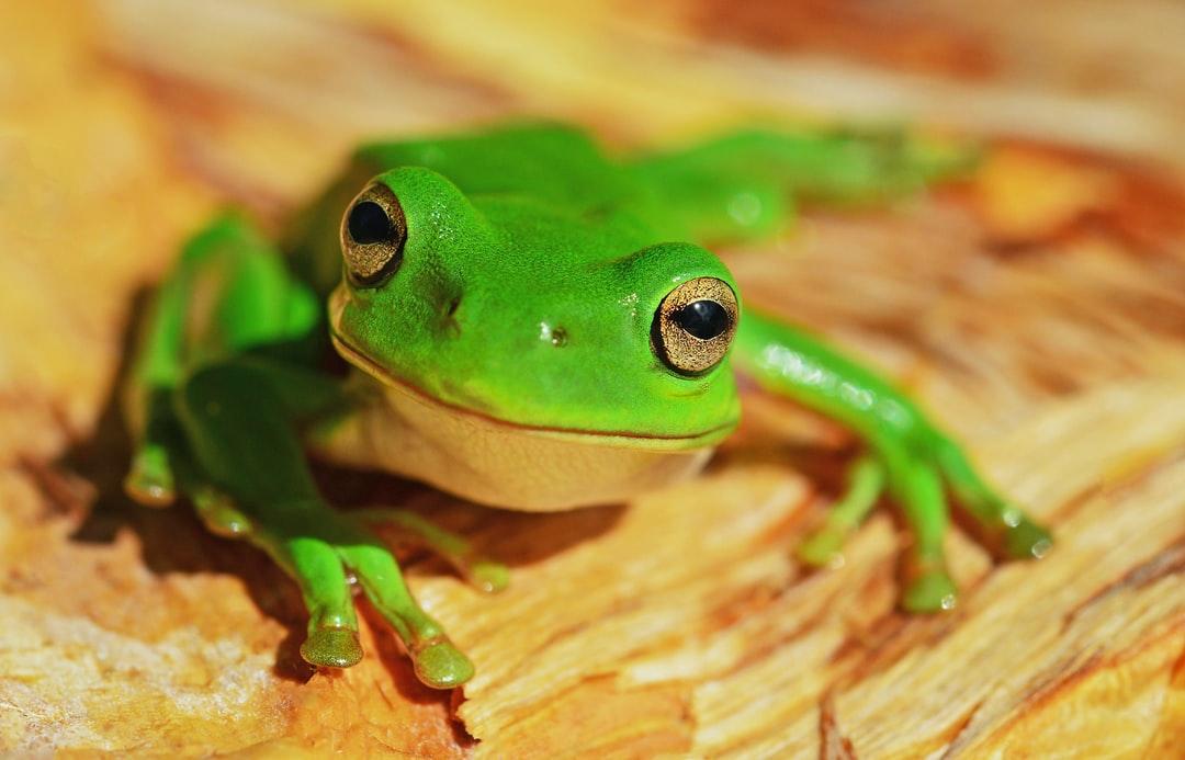 widescreen Green Frog