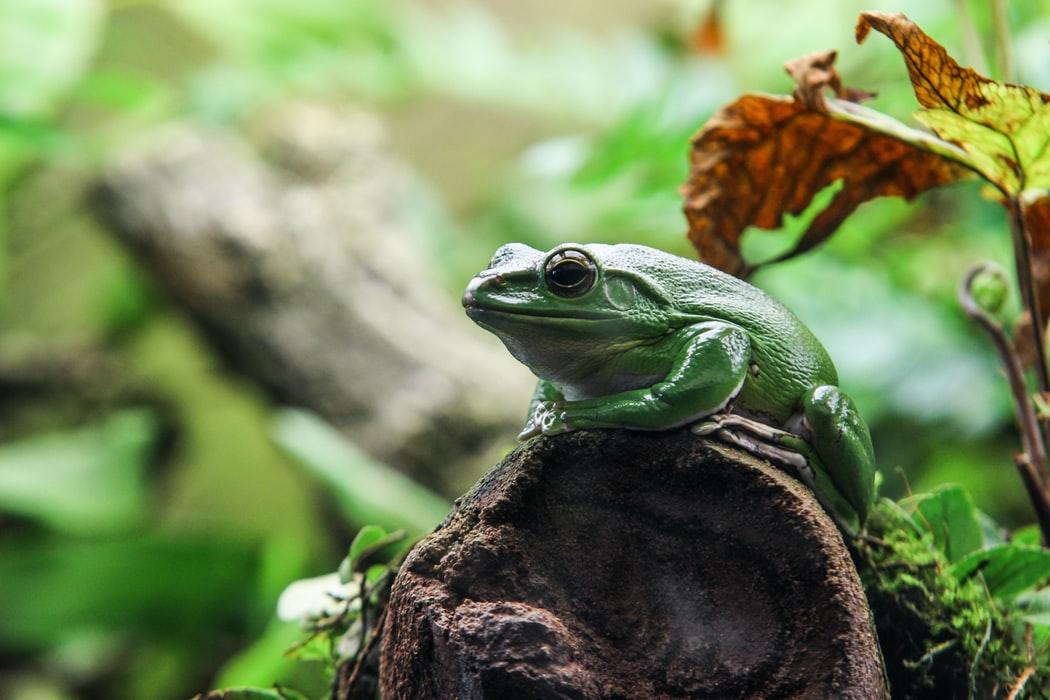 wonderful Green Frog image