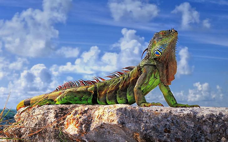 wonderful Iguana Wallpaper