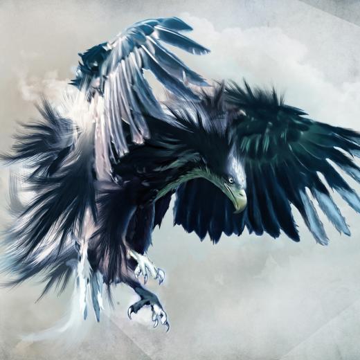amazing natural HD Hawk Wallpaper