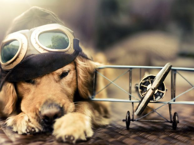 cool Funny Dog Wallpaper