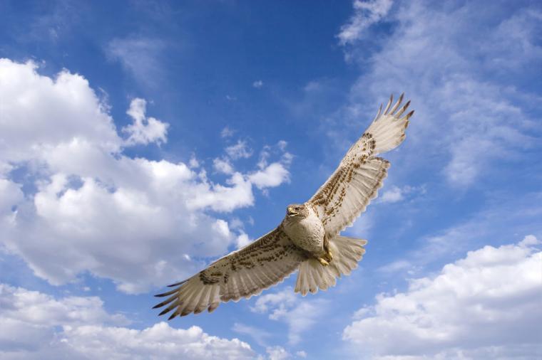 white clouds HD Hawk Wallpaper
