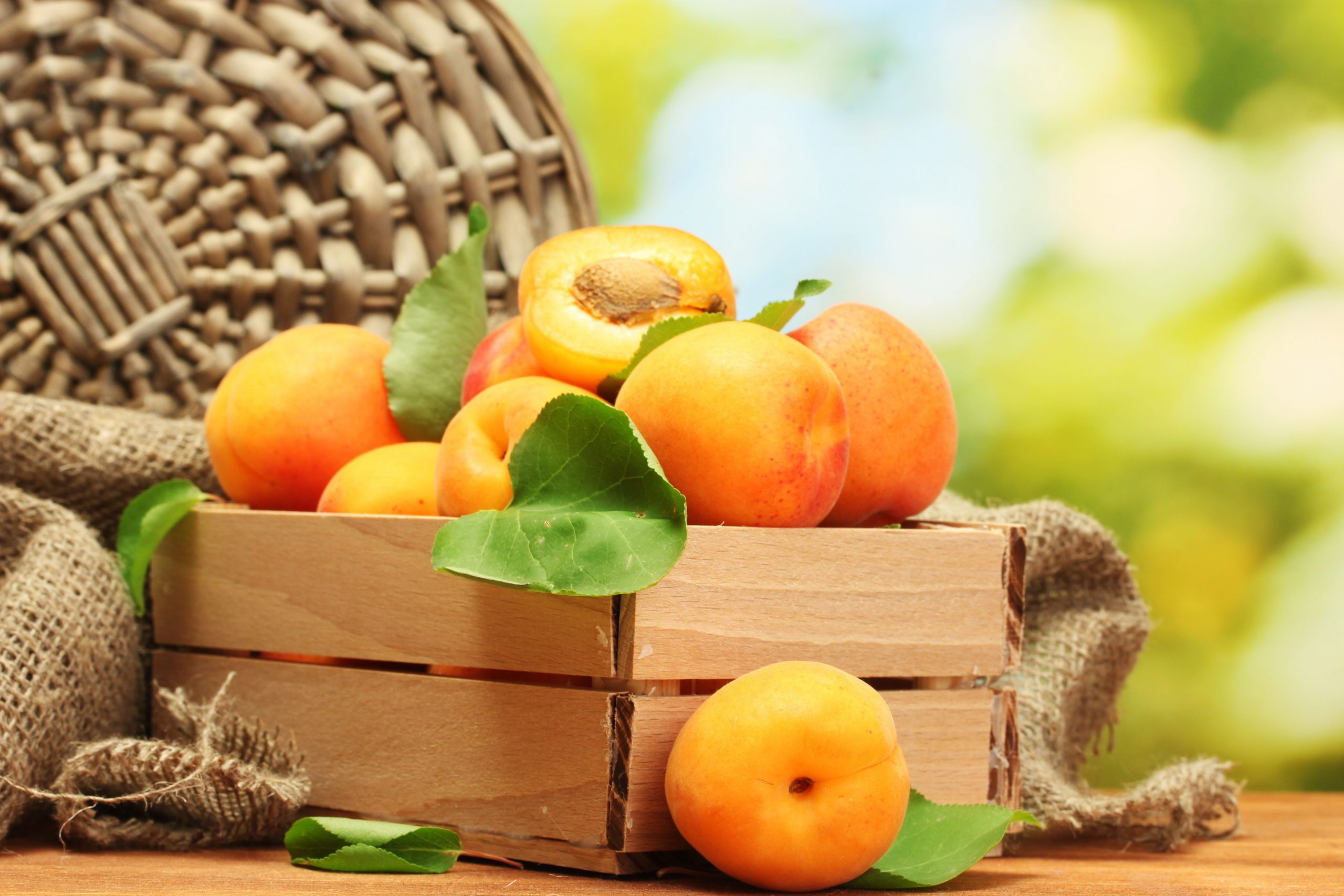 wonderful natural Apricot Wallpaper