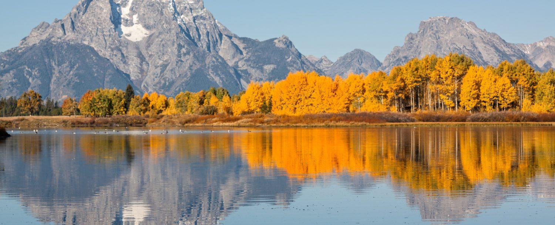 yellow tree Grand Teton National Park