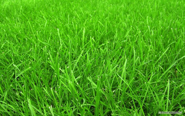 beautiful Grass Wallpaper
