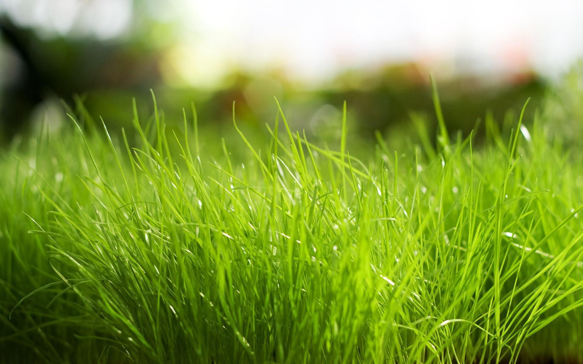 best nature Grass Wallpaper
