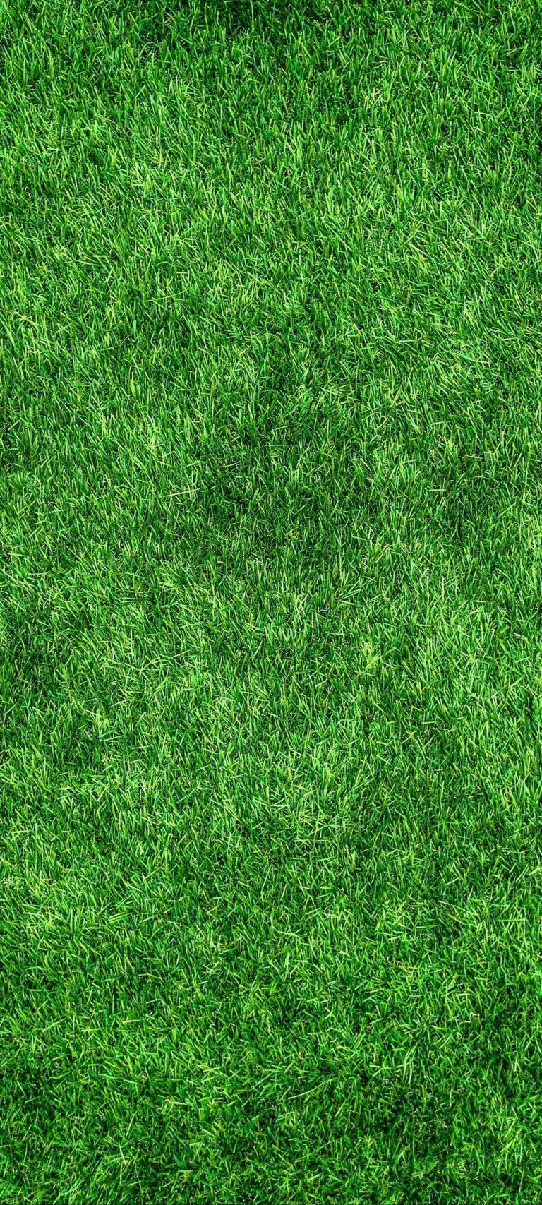 free nature Grass Wallpaper