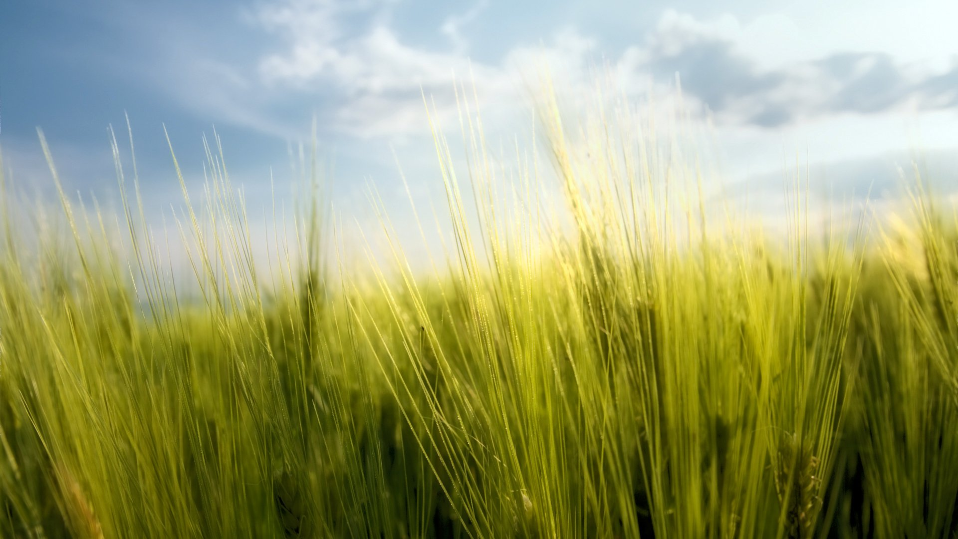 top nature Grass Wallpaper