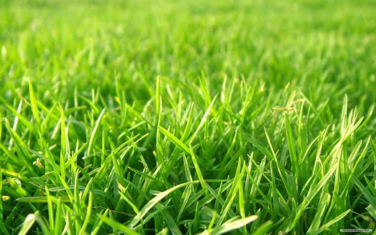 widescreen Grass Wallpaper
