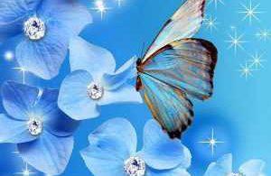 amazing Butterfly Wallpaper